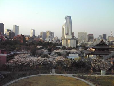 学生の時の仲間と東京で花見